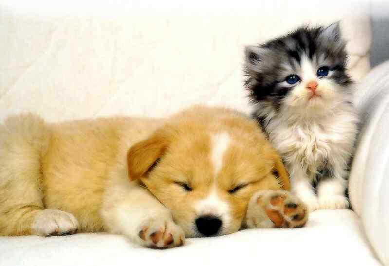 dog-cat1