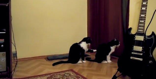 clip-pisici