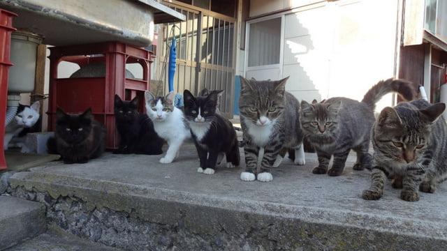 insula-pisicilor