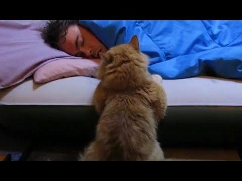 Cat Alarm Clocks Are The Best Alarm Clocks